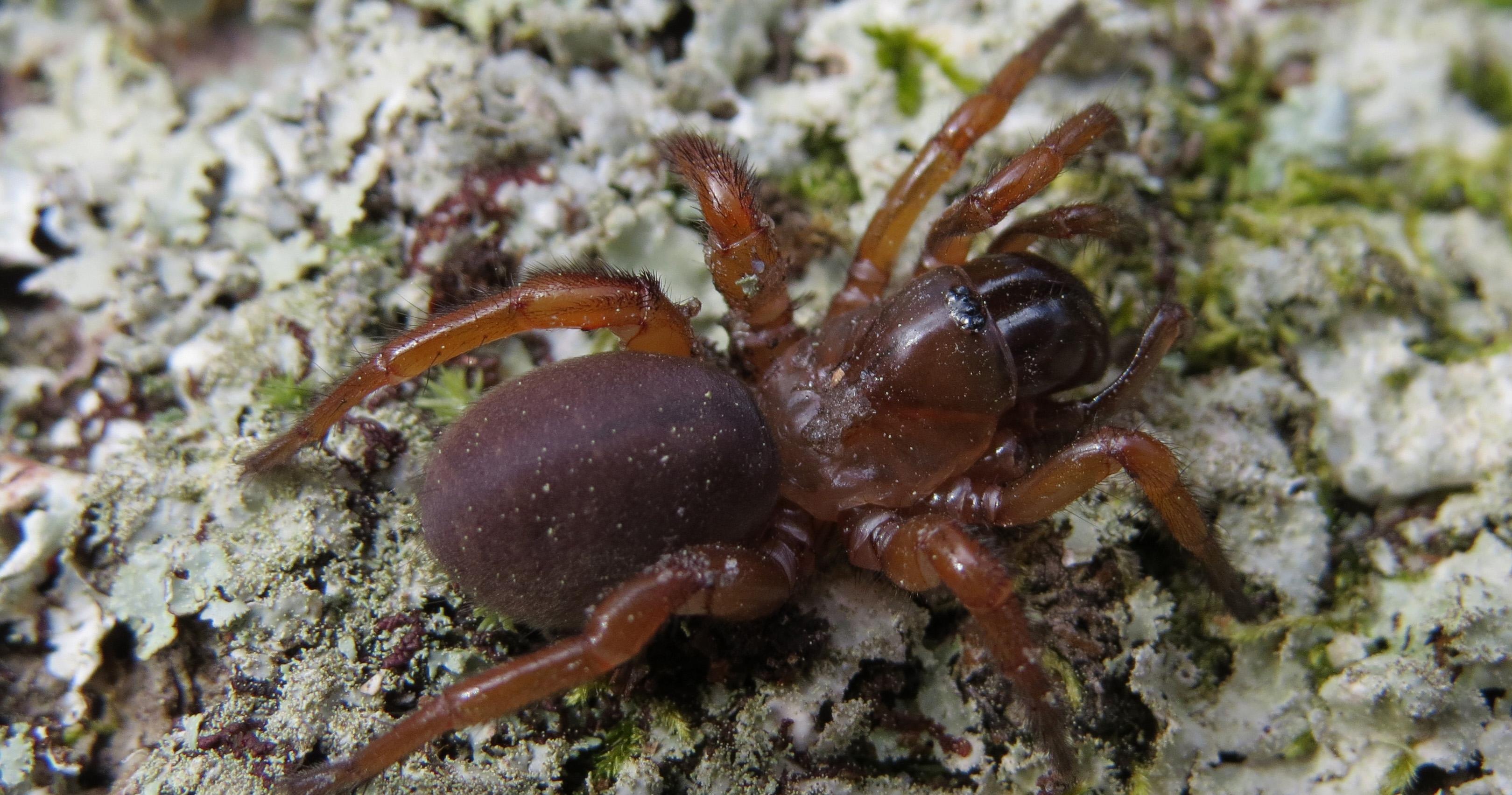Searching For Spiders Studies Explore Georgias Impressive