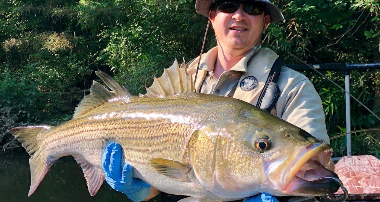 Georgia Fishing Report: June 8, 2018