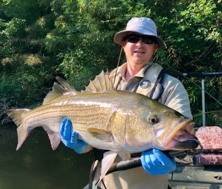 striper 20lb JD2 and MB sample Etowah 6-8-18