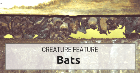 4 Facts About Georgia's Batty Creatures of the Night