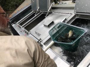 trout stocking BNT JeffS TR Oct2018