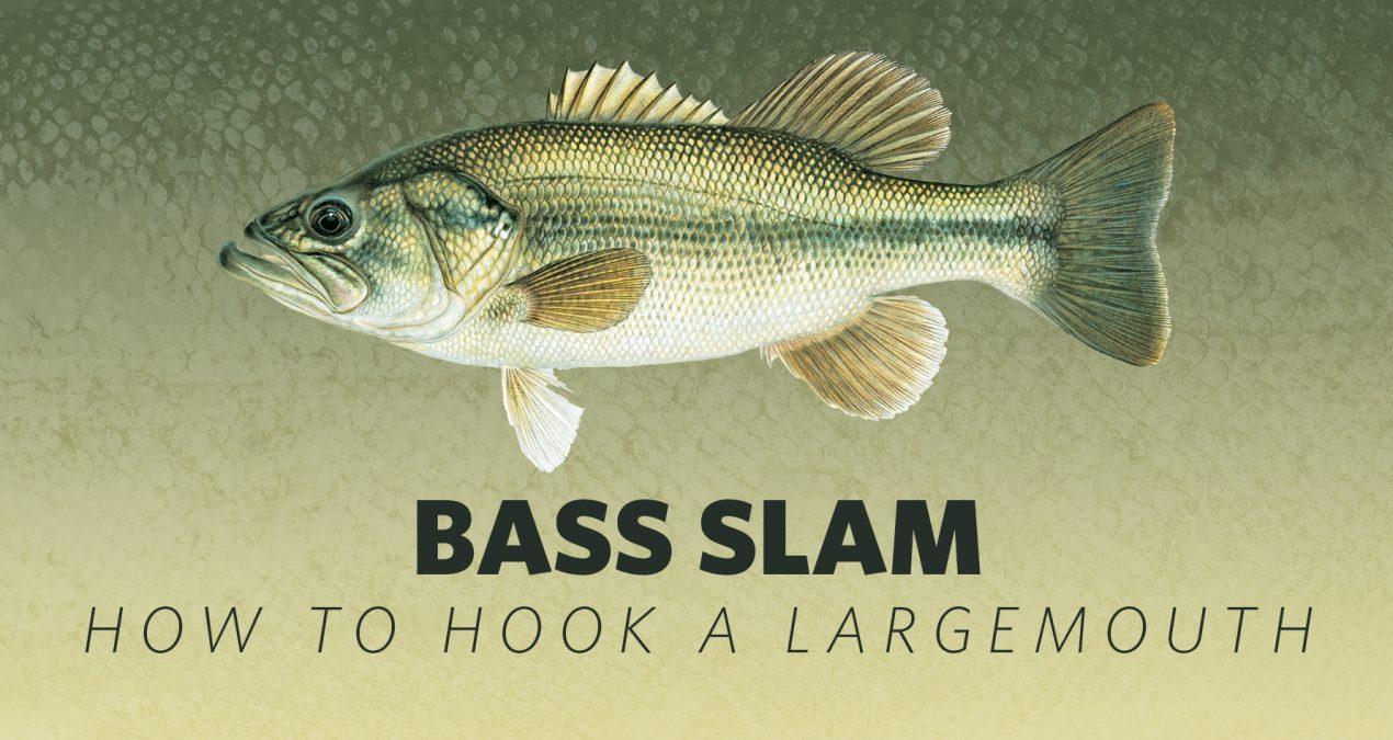 How to Hook A Bass Slam: Largemouth Bass