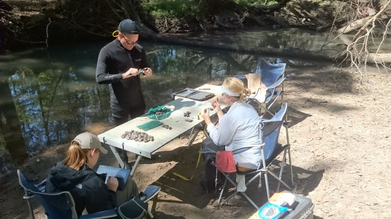 Mussel tagging-data collection