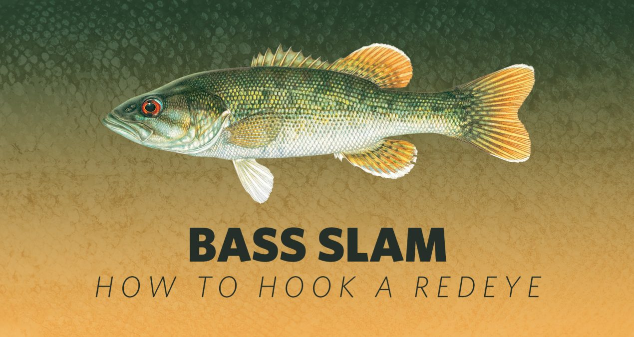How to Hook A Bass Slam: Redeye Bass