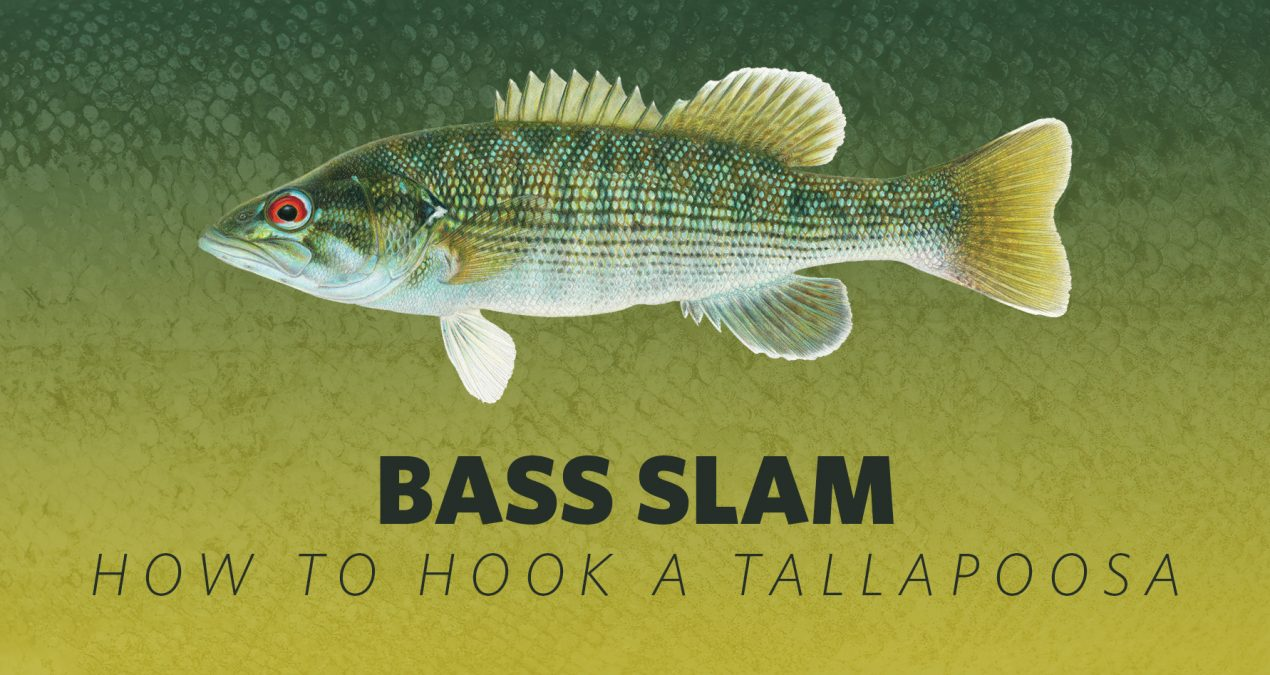 How to Hook A Bass Slam: Tallapoosa Bass
