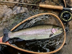 trout rbt 16in Smith DH 12-30-18small