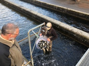 Loading up from Burton Trout Hatchery for stocking (Jan. 2019)