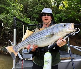 striper coosa sample MarkB May 2019