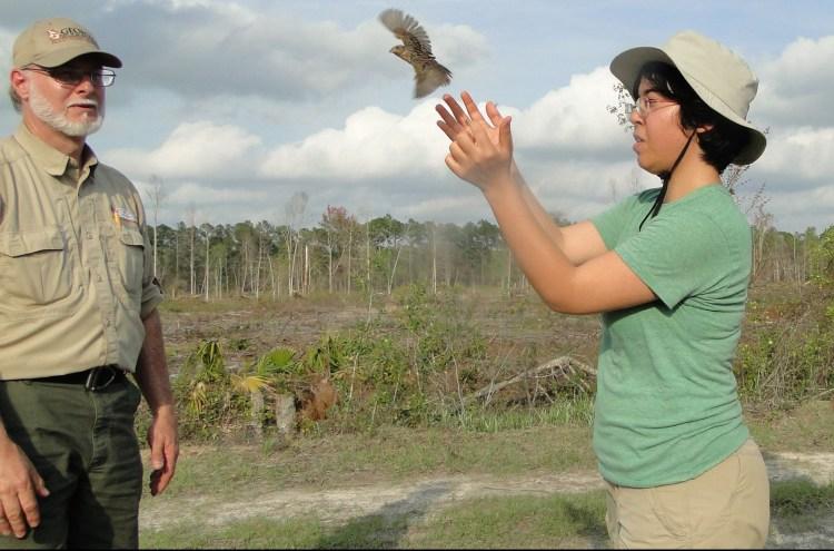 Volunteer helps release bird during breeding bird survey.
