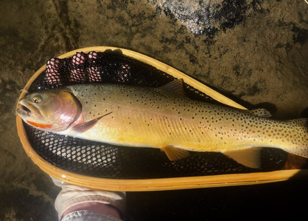 """Dredger """"strikes trout gold"""" while fishing out west!"""