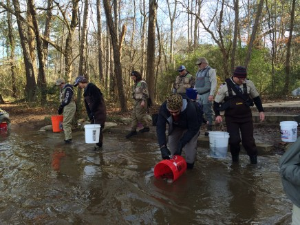 trout stock Hooch DH w vols 11-24-15 pic2