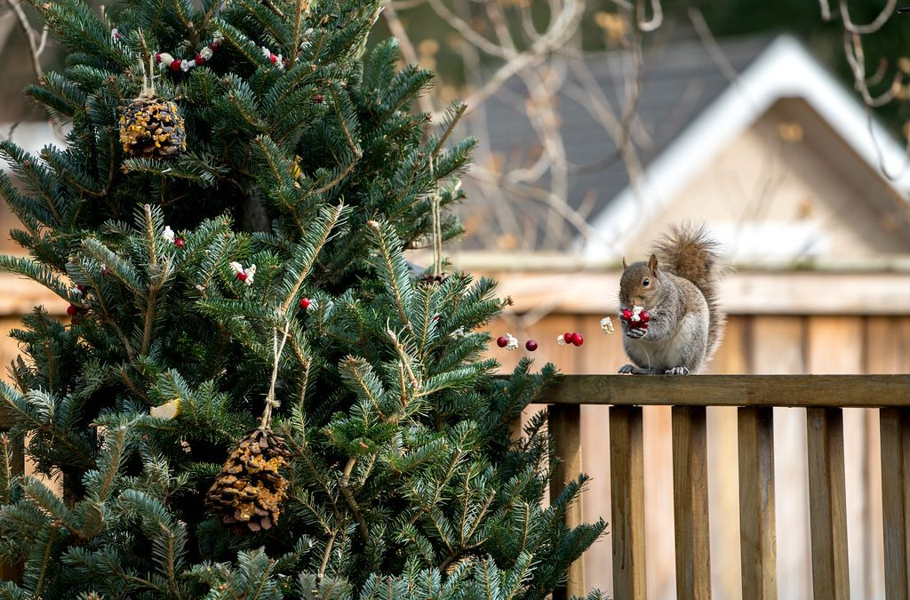 Recycle Christmas Trees for Wildlife