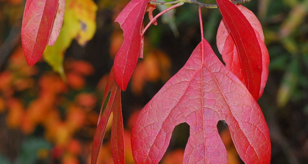 Stage Your Own Fall Foliage Show