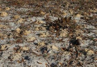 cellophane bee soil mounds