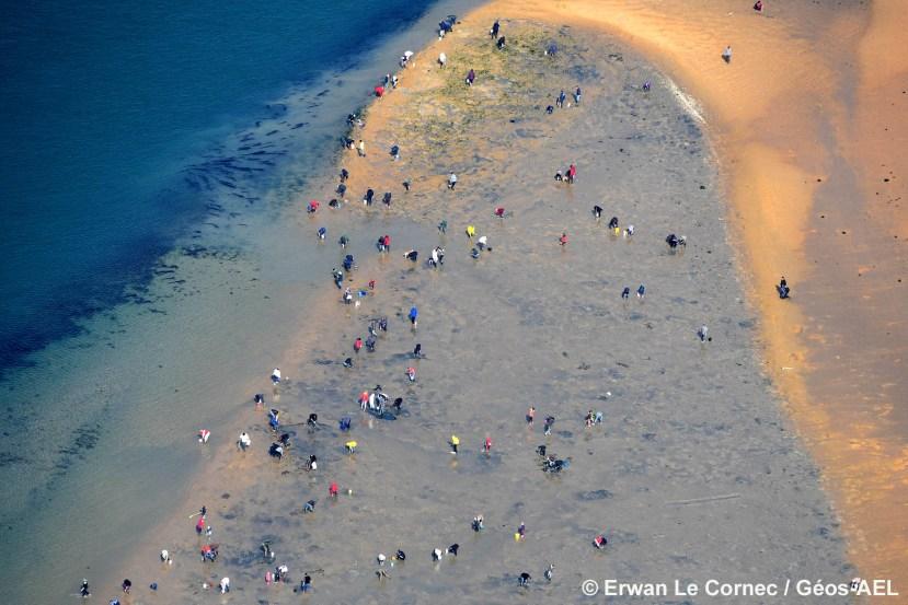 Syndicat Mixte de la Ria d'Etel, Evaluation du nombre de pêcheurs à pied sur l'estran (été 2014)