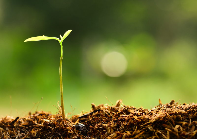 greener future plant
