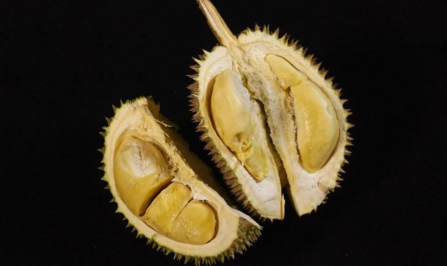 Mengintip Kebun Durian Warso Farm
