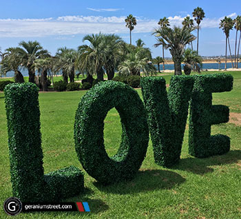 Artificial Boxwood Hedge Letters