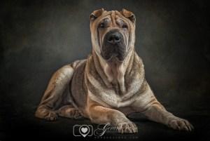 Fotografías reportaje de perros o mascotas Castellon (1)