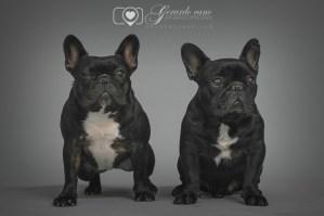 Fotos de mascotas en estudio de fotos - Reportaje de fotos de mascotas (1)