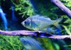 Ikan Hias Eksotis