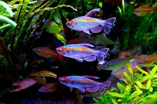 Ikan Tetra Unik