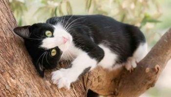 Unduh 97+  Gambar Kucing Persia Warna Hitam Putih Paling Keren HD