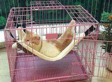 Desain Kandang Kucing