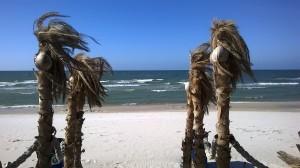 polish-east-coast-palm-trees