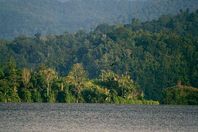 Taman Nasional Lore Lindu. Kredit: Wikimedia