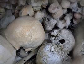 KULTURFORUM Skull & Bones (7)