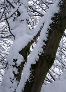 KULTURFORUM Winter www.gerhardemmerkunst.wordpress.com (19)