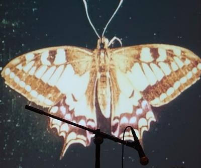 FRAMEWORKS FESTIVAL Cummi Flu & Raz Ohara - Einstein Kultur München 2016-03-10 ---