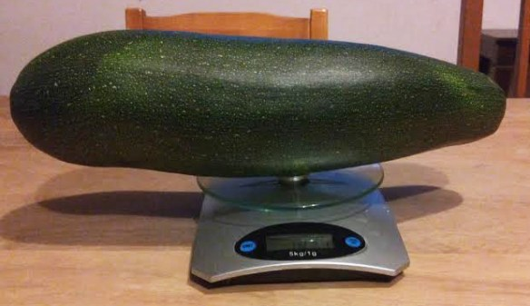 grote courgette