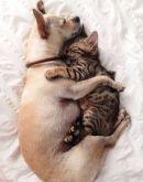 http://www.buzzfeed.com/alanamassey/cats-and-dogs-choosing-love#.rjqZZ9mVeb