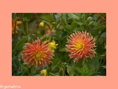 587 Blüten_new