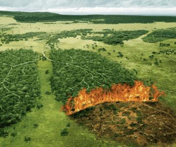 Yangınlar İklim Değişikliğinin Neticesi