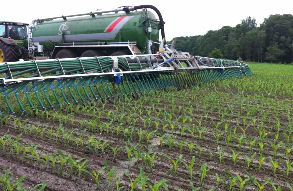 Schleppschluch in Mais
