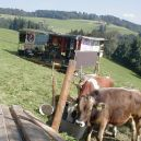 fotm01_cows1