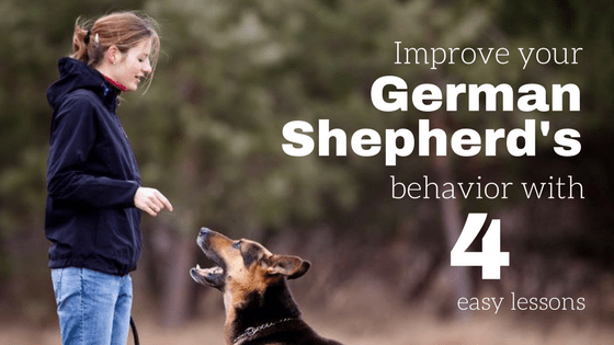 Improve your German Shepherd's behavior with 4 lessons