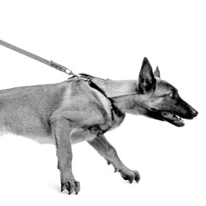 How To Train Your German Shepherd NOT To Pull On Leash