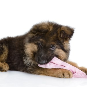 Teething Tips & Teething Relief For Puppies