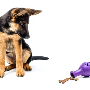 7 Engaging Puzzle Toys For German Shepherds