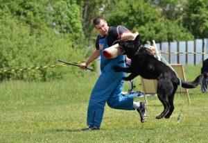 What is Schutzhund training