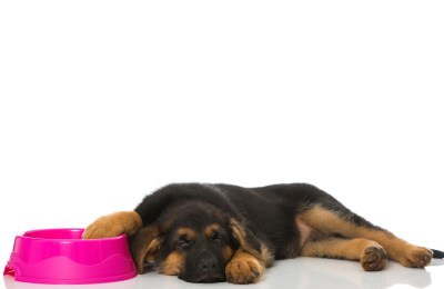 Best Dog Bowls For German Shepherds
