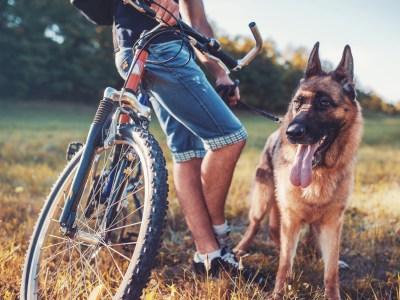 Biking With Your German Shepherd