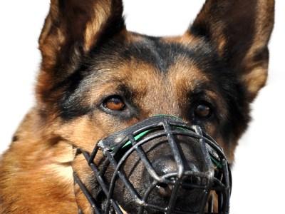 Best Muzzle For German Shepherds