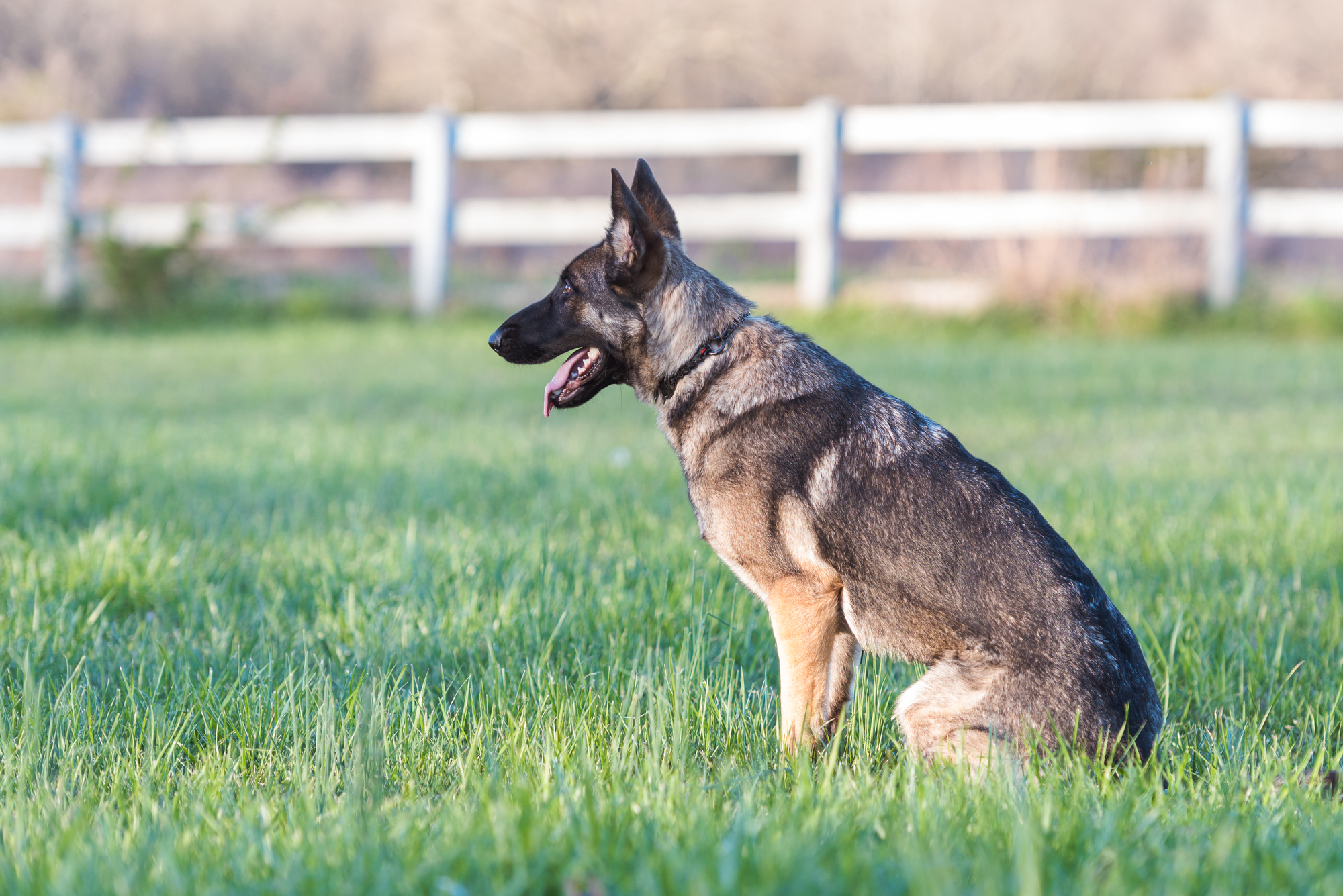 best invisible fence for german shepherd