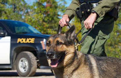 Why German Shepherds Are Used As Police Dogs