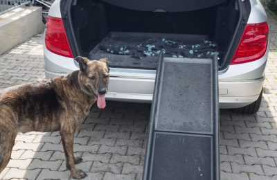 Best Dog Ramps For Older Dogs